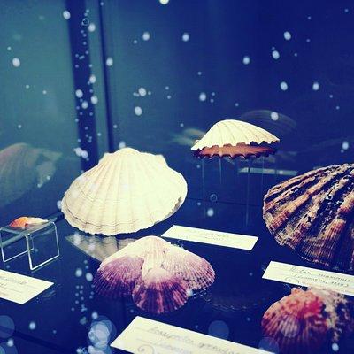 @Shell_Museum_Belgrade