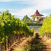 Wine Tours Rupel