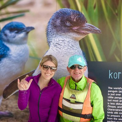 Kororā the little blue penguin can often be spotted along our coastline