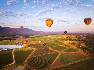 Balloon Aloft flights over the vineyards