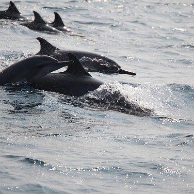 Dolphin Watching with Dolphin Wadiya Sri Lanka