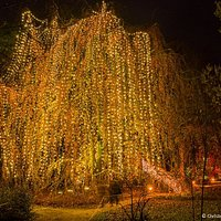 Lichterglanz im Christmas Garden Berlin - die Märchenbuche