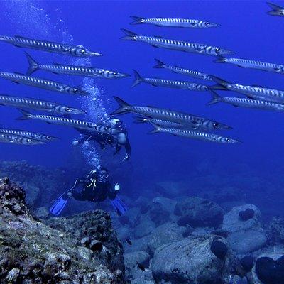 Baracudas - baracuda reef divesite in Nisyros