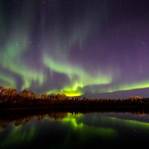 Wedgewood is one of the best Northern Lights viewing hotels in Fairbanks. Due to its location tucked away from artificial lights, and access to the 75-acre Wedgewood Wildlife Sanctuary - visitors can watch the northern lights steps from their room.