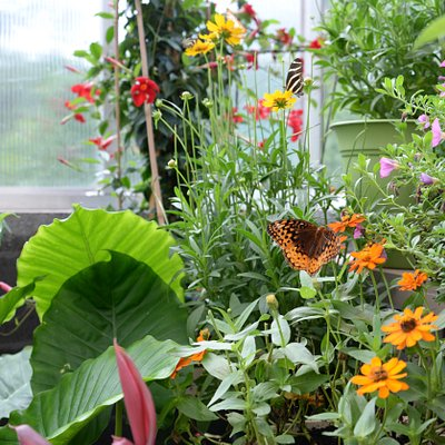 Our indoor conservatory features a variety of butterflies!