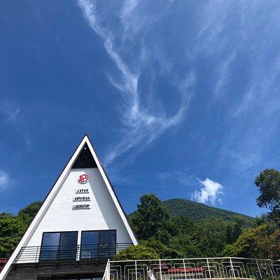日本両棲類研究所と男体山