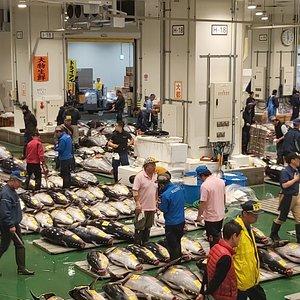 tuna auction