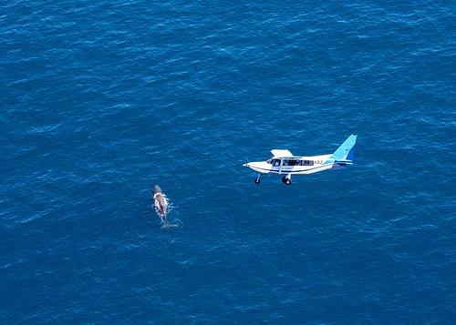 Plane above Sperm whale