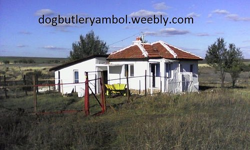 If you need to leave your pet in good hands try the dog butler in nedyalsko yambol Bulgaria