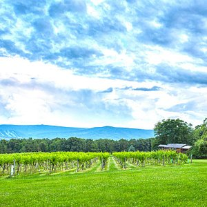View from Winery Across to Tussey Mountain