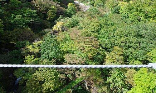画面の真ん中を、ケーブルが横切っています。そのずっと下方に、橋のようなものが見えます。