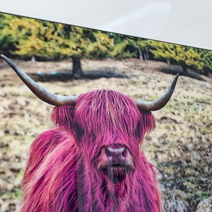 """Close-up of the """"Pinkvieh"""" - a fine-art photo from Chris Kelch. Come and see this and other artworks in the gallery."""