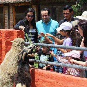 Familias disfrutando de nuestro recorrido interactivo acompañados con nuestros excelentes guías.