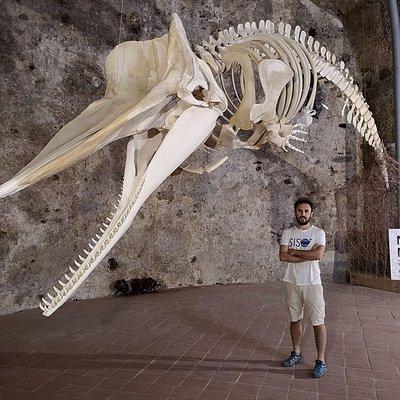 Il Capodoglio Siso con il biologo Carmelo Isgrò, che ha recuperato e ricostruito lo scheletro. E' il fondatore del MuMa - Museo del Mare di Milazzo