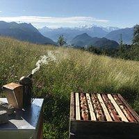 Rucher de haute-montagne