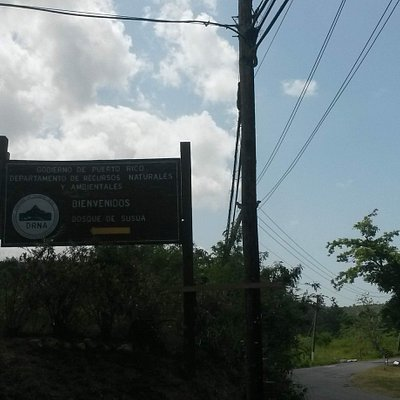 Susua State Forest