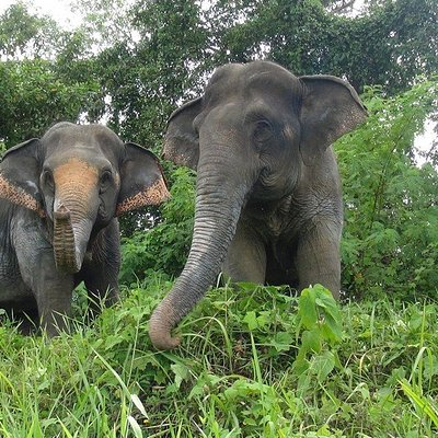 Play your part in ethical tourism helping Thailand's elephants. Rescued from the logging trade, resident elephants OI and Sao now roam free and enjoy meeting small groups of visitors.