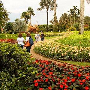 Jardim dos Hemerocallis