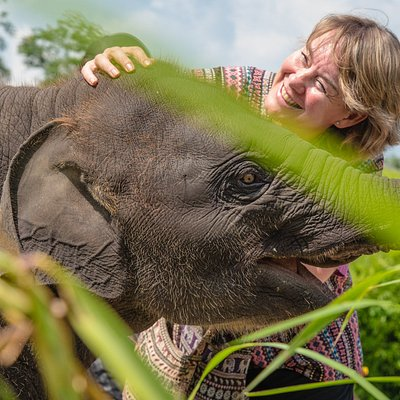 We invite you to come and personally pamper our elephants in Chiang Mai Thailand you will help care for these magnificent animals.  You can touch them, feed them ,bathe them and get to know their individual habits and antics.  Love Elephant Sanctuary Tours, Chiang Mai.