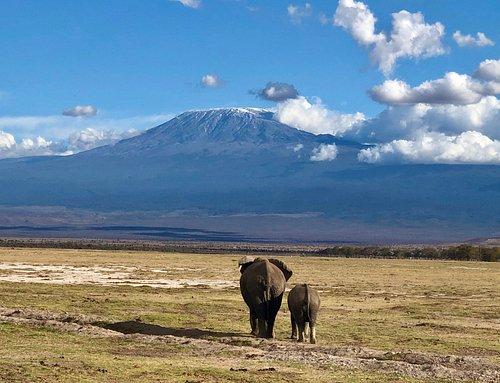 There is hardly any snow on Mount Kilimanjaro -Amboseli