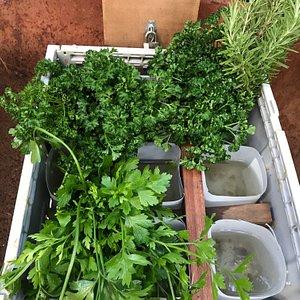 Delicious fresh herbs at Thornleigh Farm