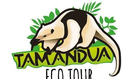 Tamandua Ecotour