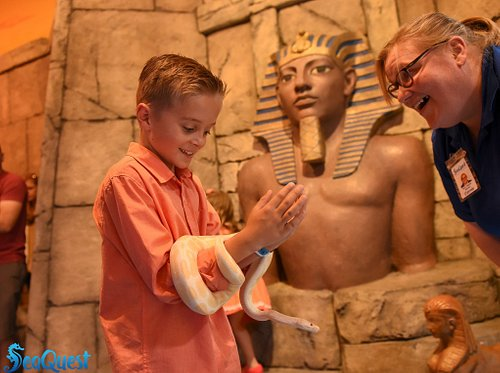 Are you brave enough to hold a snake?