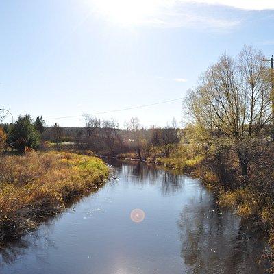 Photo from a walking bridge on the walking tour.