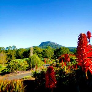 View from Garden looking towards Mt Keira