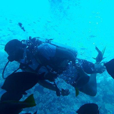 للذين يعشقون أعماق البحار ولا يستطعيون الغوص بإمكانهم القيام برحلة في غواصة  ورؤية الأسماك والمرجان والغواصين والتمتع بما خلق الله من جمال
