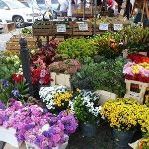 Любители цветов - не пропустите!!!