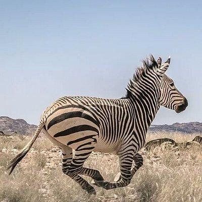 Ramjet Tours & Safaris