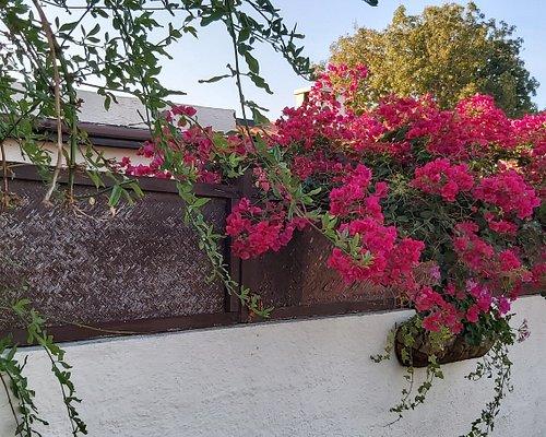 Beautiful paphos