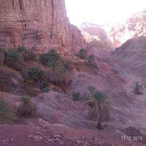 Part I, day 1. The Ein Malha palm tree oasis