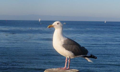San Carlos Beach, Monterey, Ca