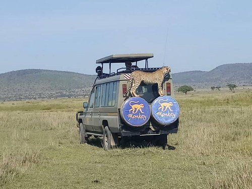 Cheetahs love our vehicle :)
