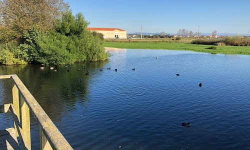 Parque municipal Murtosa