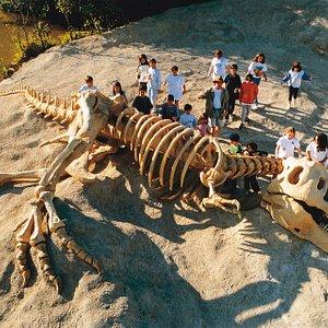 Tiranossauro Rex - Sítio do Carroção