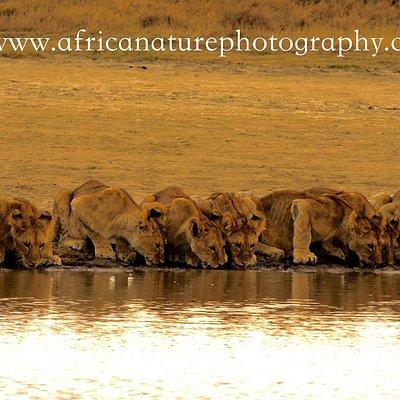 Tanzania Photo Safari