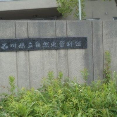 石川県立自然史資料館