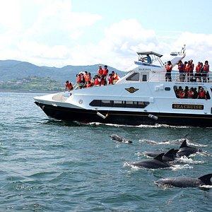 船の側でイルカの群れが!
