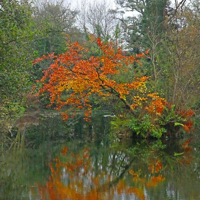 Autumn Foliage, beside a pond.