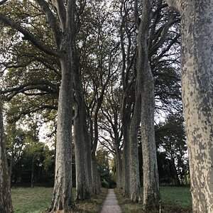 Avenues of plane trees - shady in summer, colourful in autumn.