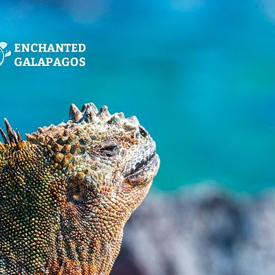 Enchanted by Animals in Galapagos