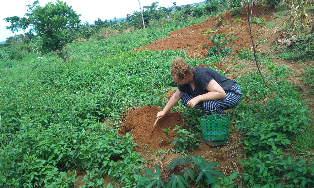 Emma Harris a volunteer from the Australia volunteering to plant Cassava at the farm for food to support the needy children at Saint Ann Foundation.
