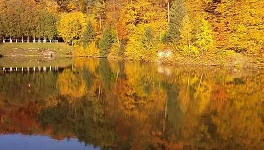 Доброго ранку! Погода тішить львів'ян та гостей нашого міста 🌞сонечком та погожим днем. Саме час для роздумів біля озера з горнятком ☕️гарячої кави. 🏨Готель Львівська Швейцарія розташований саме біля озера оточеного лісом. Ласкаво Просимо.