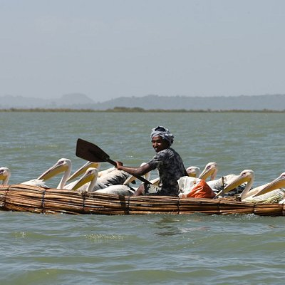 Papyrus Boat and Pelicans at Lake Tana, Ethiopia