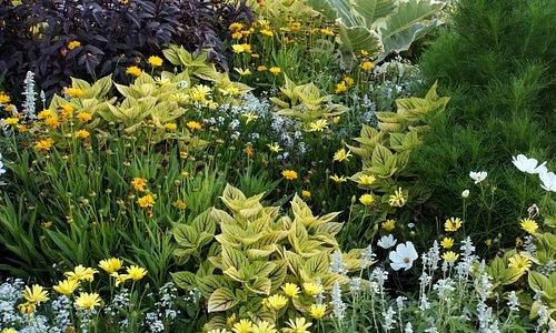 Цветы у подножья