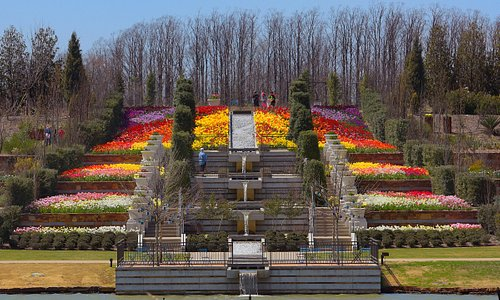 Tulsa Botanic Garden ushers in spring with over 100,000 spring bulbs including tulips, hyacinths, daffodils and more, making it one of the largest bulb displays in the region.