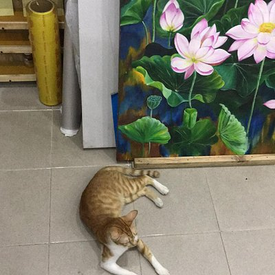 Pancake is the one of cats which is living in VNCE galleries.  Bong & Pancake is also the name of 2 cats of them,  but they are have 3 cats at this moment.